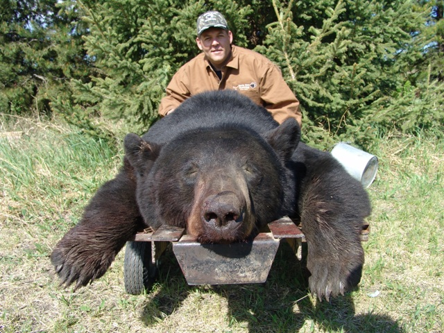 Canada Bear Hunts North Star Outfitting