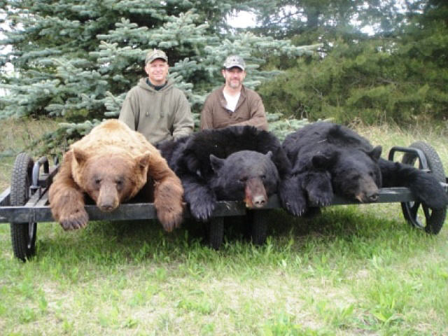 Alberta Canada Black Bear Hunts