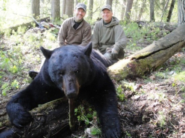 bear hunting with North Star Outfitting