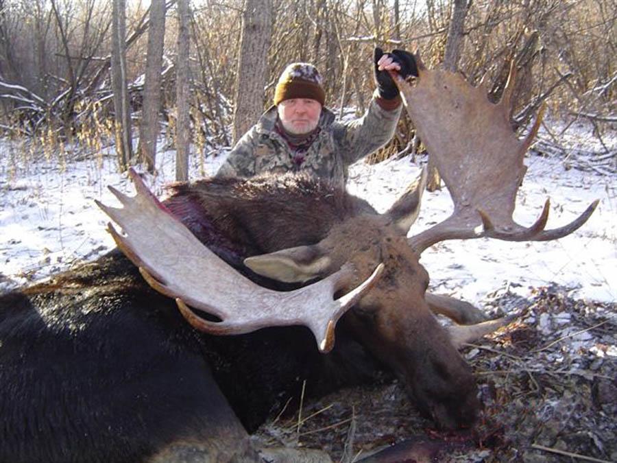 Moose Hunting Alberta Canada